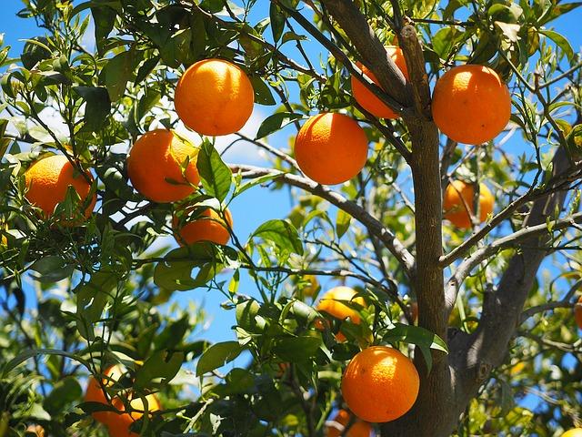 Entretien arbres fruitiers